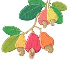 vector cashew on white background, isolated nuts illustration.