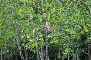 Selective focus on monkeys sit on the branches of mangrove trees with blurred jungle in background photo
