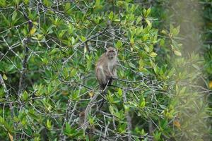 Selective focus on monkey sits on the branches of mangrove trees with blurred jungle in background photo