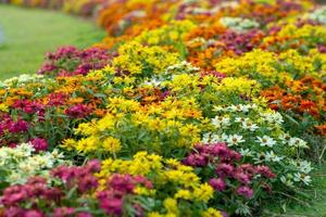 Landscape of blossom colorful flowers in the garden photo