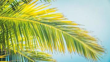 hermosa palmera de coco foto