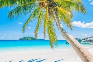 Beautiful coconut palm tree photo