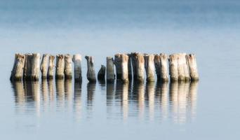 Wooden posts in a row in water