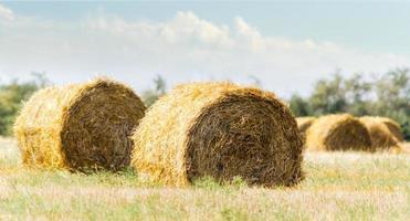 Bales of hay at daytime