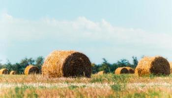 campo de haybales