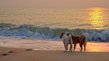 Cute Dogs Playing on the Beach at Sunset