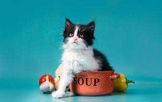 gato con un plato de sopa