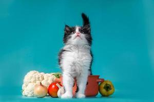 Kitten with soup ingredients photo