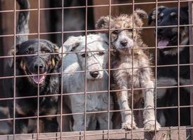 cuatro cachorros detrás de una valla de metal foto