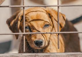 Brown puppy behind a fence photo