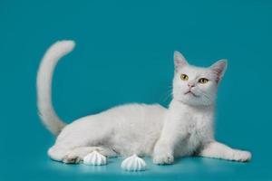 gato blanco junto a merengues