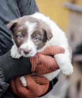 persona sosteniendo un cachorro foto