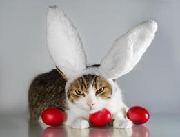 Cat wearing rabbit ears photo