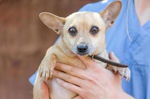 veterinario sosteniendo un perro marrón foto