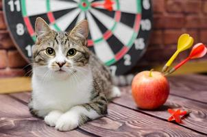 Cat with darts and apple photo