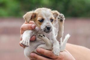persona sosteniendo un cachorro