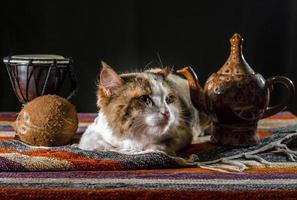 gato con tetera y pan foto