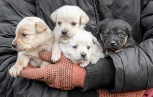 Puppies in a person's arms photo