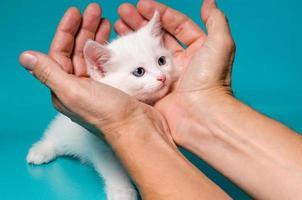 gatito blanco en manos foto