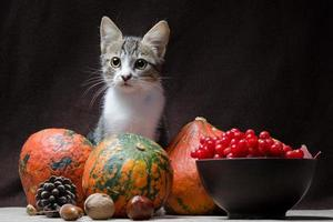Cat with autumn fruit photo