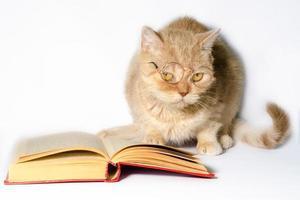 gato en gafas de lectura con un libro foto