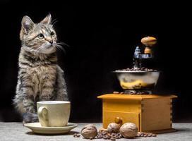 gato con café tostado foto