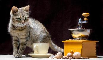 Tabby cat with roasted coffee photo