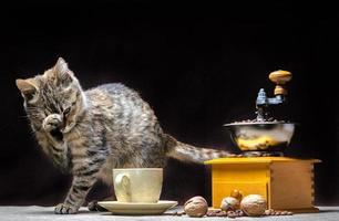 gato con molinillo de café foto