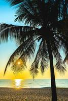 silueta de una palmera
