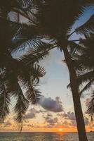 silueta de una palmera foto