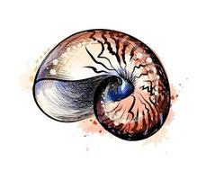 concha de mar de un toque de acuarela, boceto dibujado a mano. ilustración vectorial de pinturas vector
