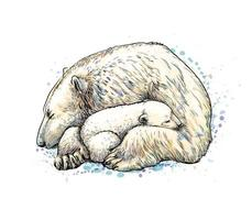 Polar bear with cub from a splash of watercolor, hand drawn sketch. Vector illustration of paints