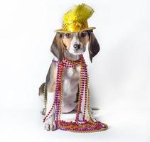 Mardi Gras puppy on white background photo
