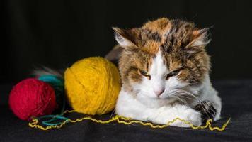 gato enojado con hilo foto