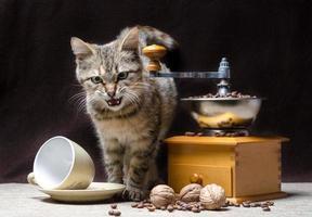 gato enojado con molinillo de café foto