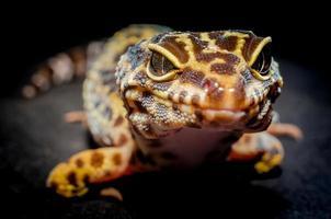 Close-up of a lizard photo