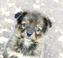primer plano de cachorro triste foto