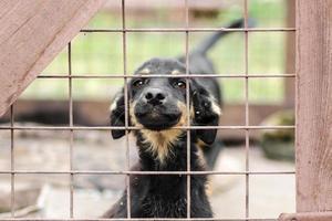Cachorro marrón y negro con la cara pegada fuera de la valla foto