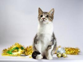 Tabby kitten with Mardi Gras decor photo