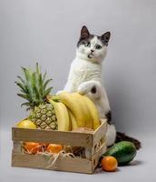 gato blanco y negro con fruta foto