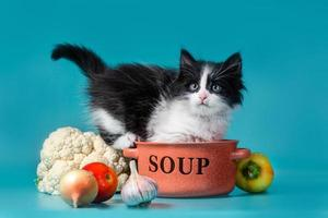 Kitten with fresh soup ingredients photo