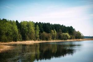 River with forest on a sunny day photo
