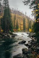 River in the forest photo