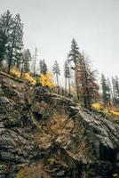 Rocky mountain with trees photo