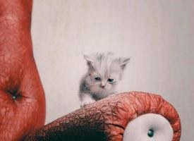 gatito triste en la silla roja foto