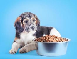 cachorro con un plato de comida foto