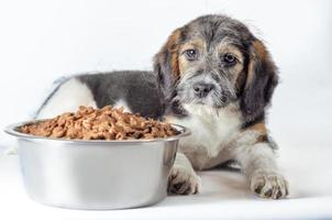 perro peludo con comida foto