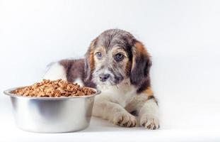 perro triste con plato de comida foto