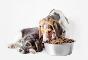 dos cachorros con plato de comida foto