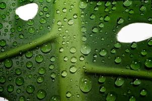 Green leaf with holes and dewdrops photo